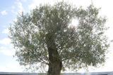 O Sol como energia | Turma de Metodologias de Inetervenção em Edifícios (Escola Profissional Amar Terra Verde- Pólo de Amares, Amares)